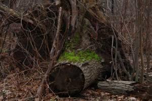 Grassy-Tree